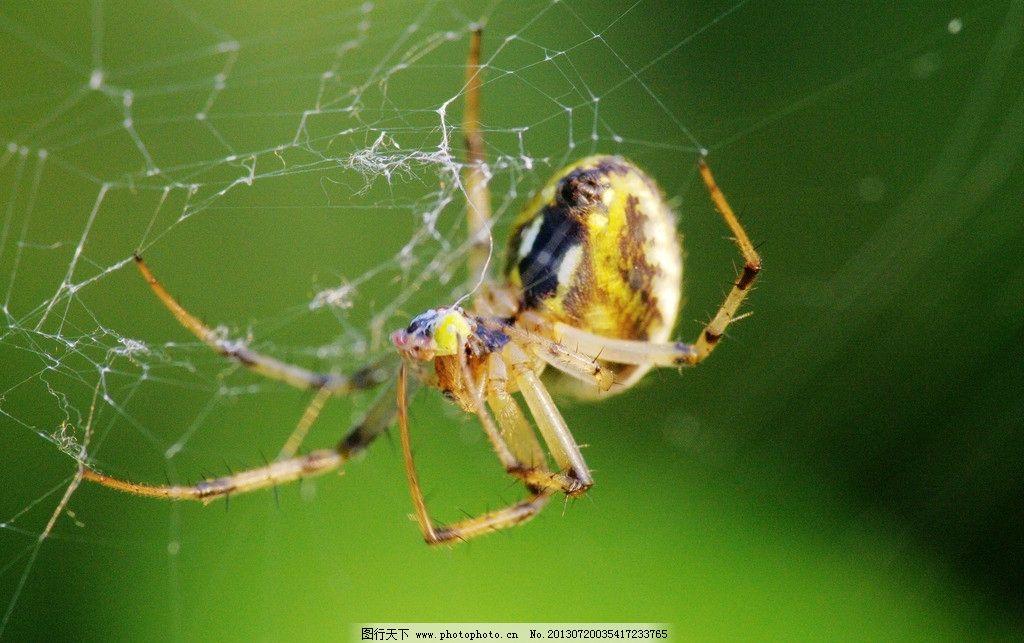 蜘蛛网 节肢动物
