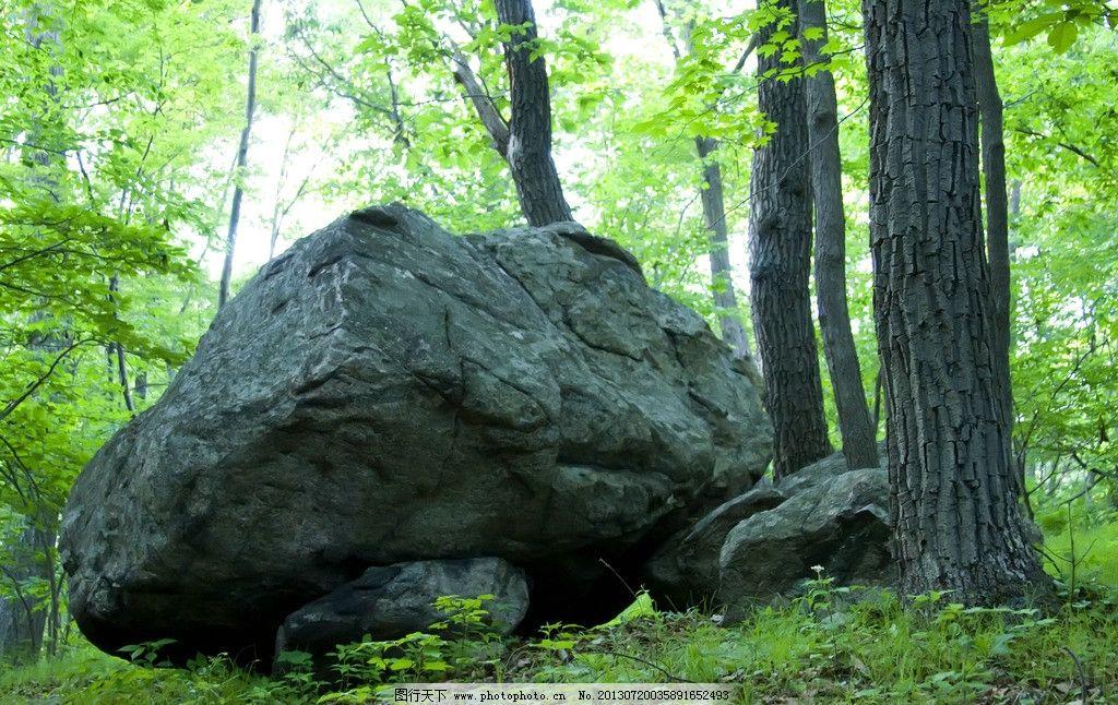 森林石头图片