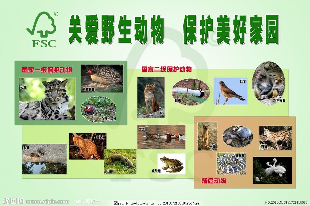 野生动物保护 宣传 绿色