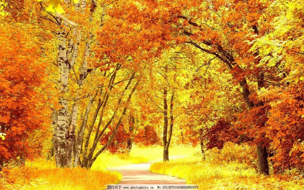 森林小路 林间小路 曲径通幽 小径 大路 秋季 秋天 落叶 树林