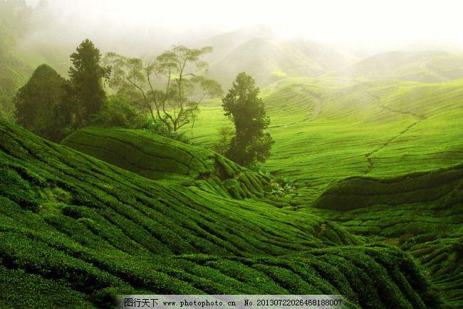 绿色 绿色免费下载 草原 高山 唯美风景 草甸 图片素材 风景生活旅游