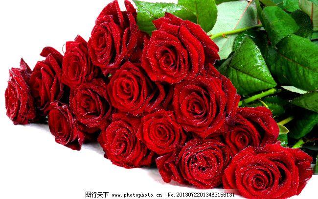 玫瑰花 玫瑰花免费下载 爱情 红背景 花朵 婚礼 婚庆 婚宴 浪漫图片