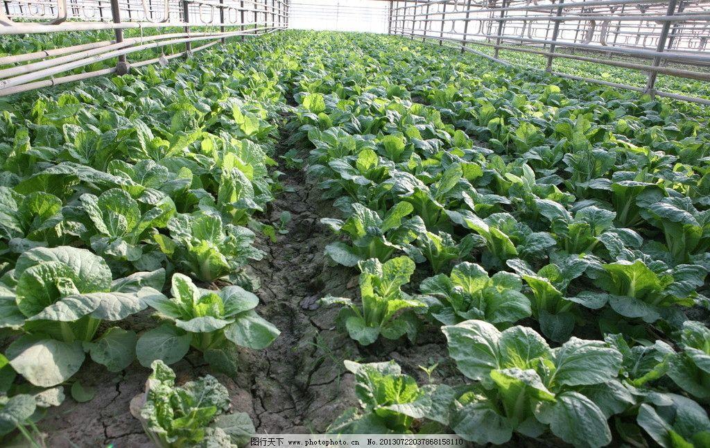 三月份种植什么蔬菜