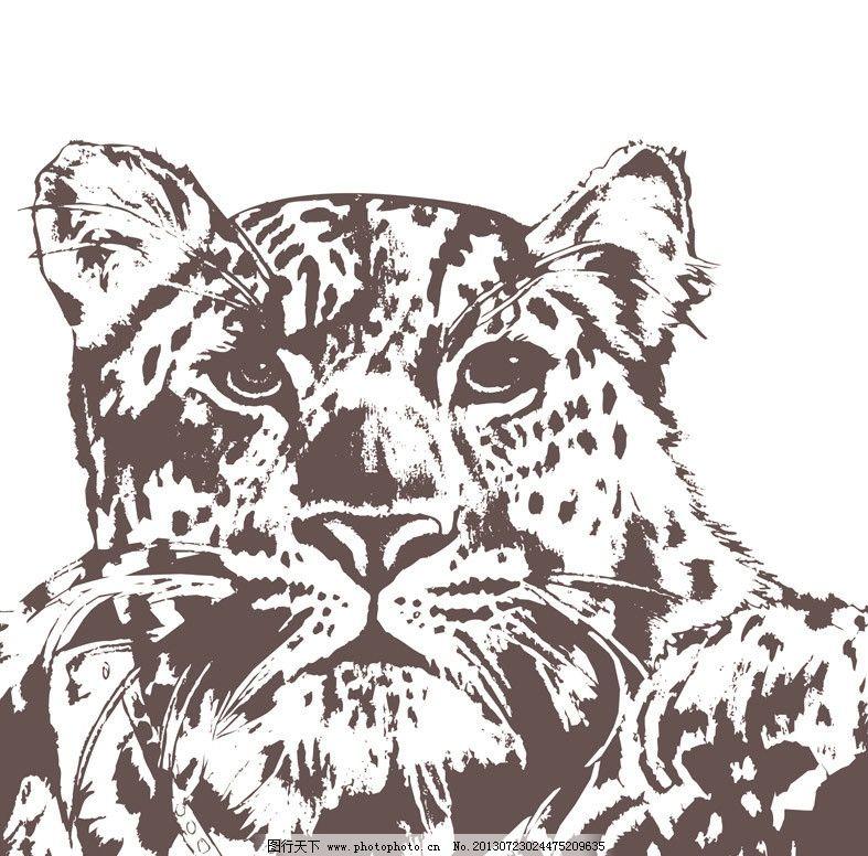 豹子 动物素描