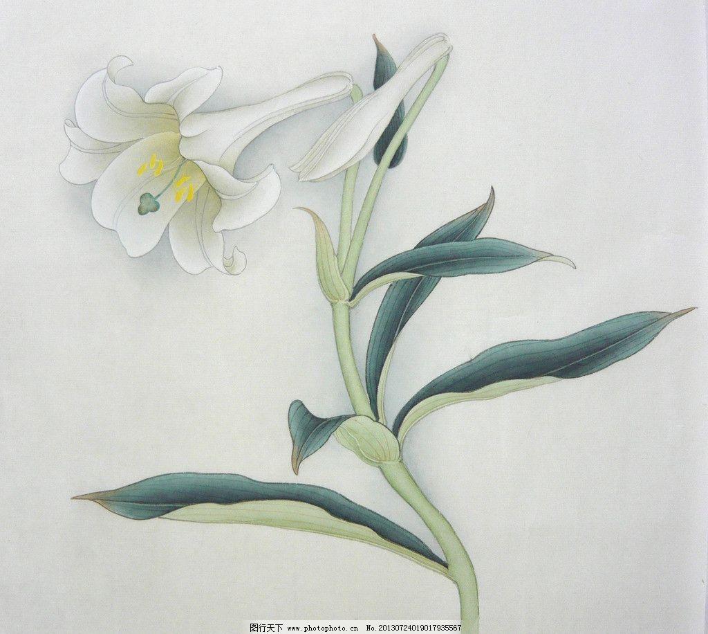 手绘花朵 工笔画 水墨画 植物 花朵 萱草 绘画书法 文化艺术 设计 1