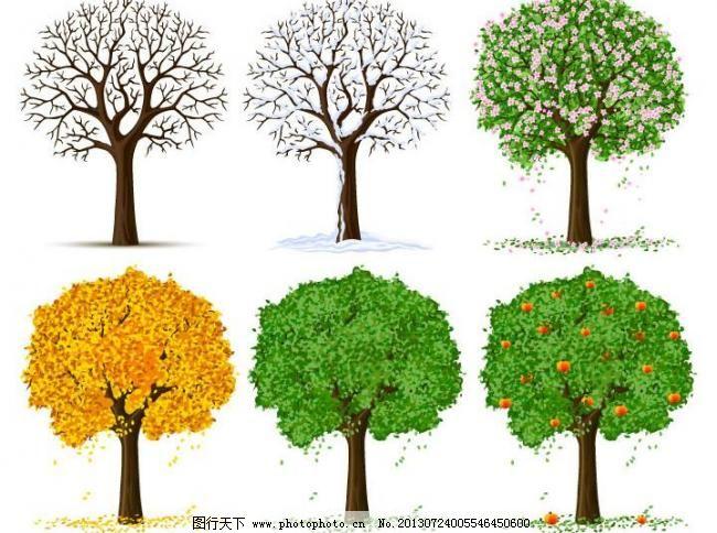 树林 树林图片免费下载 果树 绿树 树木 硕果累累 自然风景 自然景观