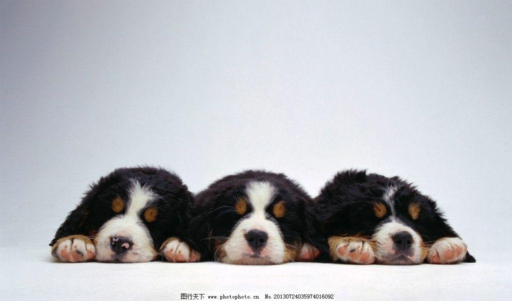 狗狗 摄影 动物 黑狗 睡觉 壁纸 家禽家畜 生物世界 72dpi jpg