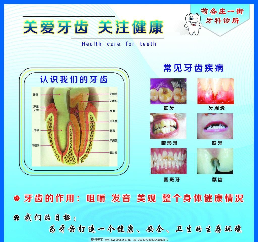 牙齿构造 牙齿构成 关爱牙齿 牙科 牙医 牙齿的作用 常见牙齿疾病