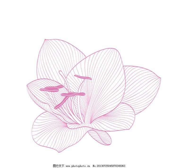 素描花朵图片简单唯美
