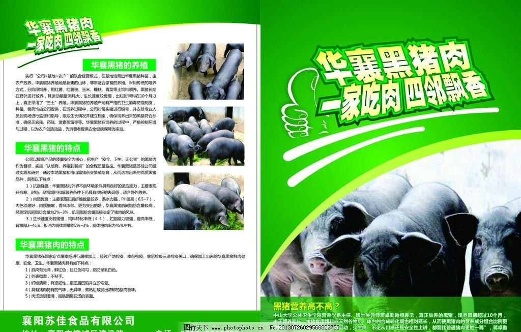 华襄黑猪肉 宣传单 绿色背景 黑猪营养 食品有限公司 广告设计 矢量
