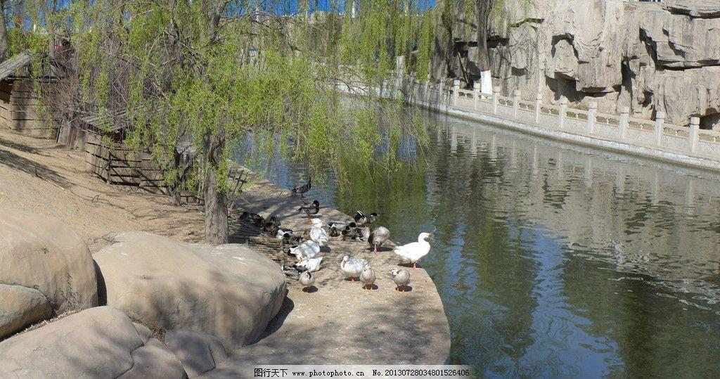 太原动物园图片