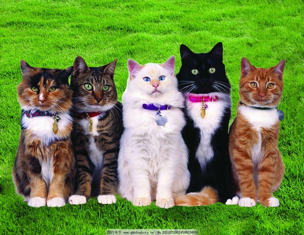 动物 猫图片