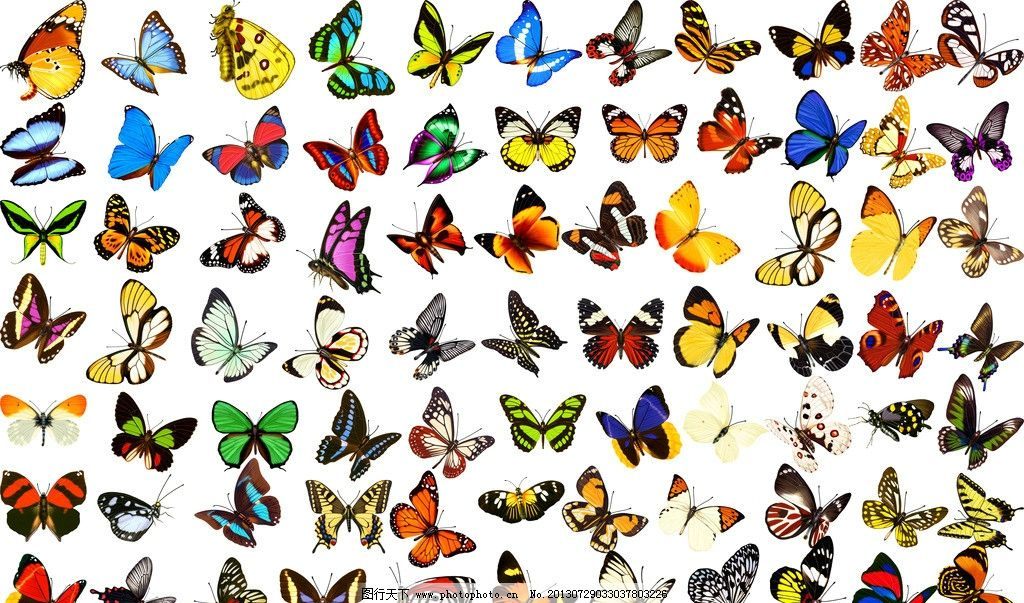 蝴蝶 虫子 彩色蝴蝶 飞行动物 碟蛾 源文件