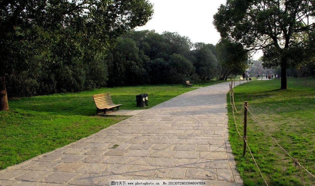 公园树木名称及图片