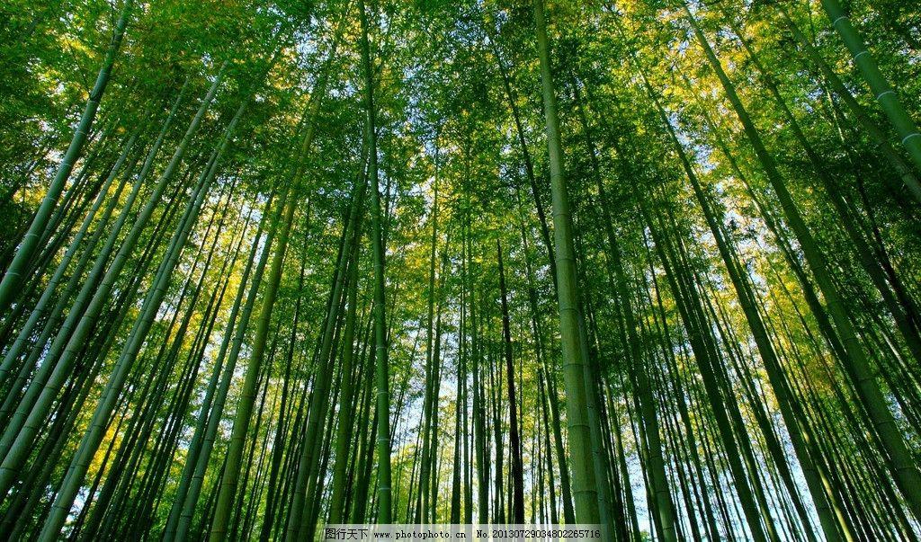 竹林山水风景图片