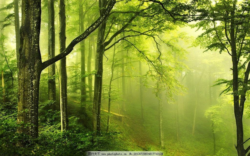树林雾气 自然风景 风景壁纸 春天 春天自然风景系列一 自然景观