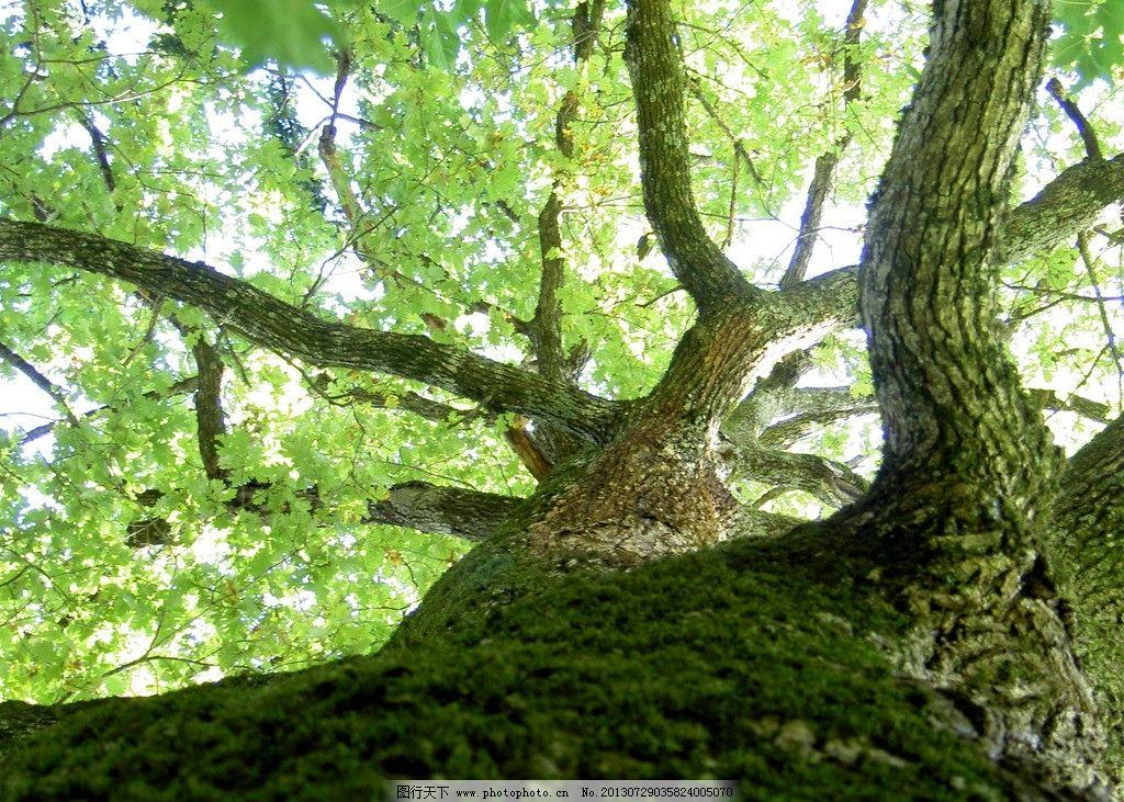 树枝树叶 自然风景 风景壁纸 春天 树干 树叶 大树 树木树叶 生物世界