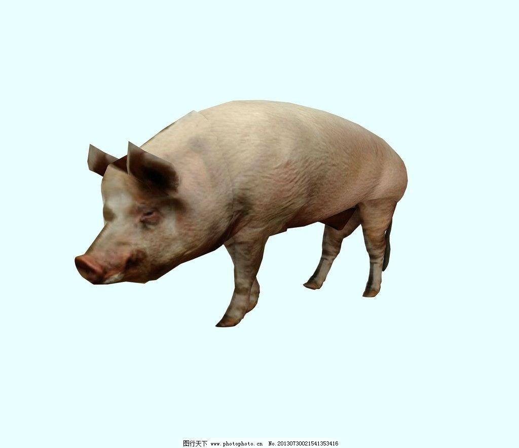 动物模型图片_其他_3d设计_图行天下图库
