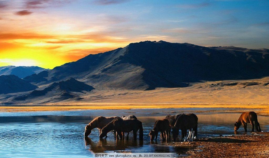 野马 草原 红棕色 湖泊 山脉 摄影 野生 动物系列