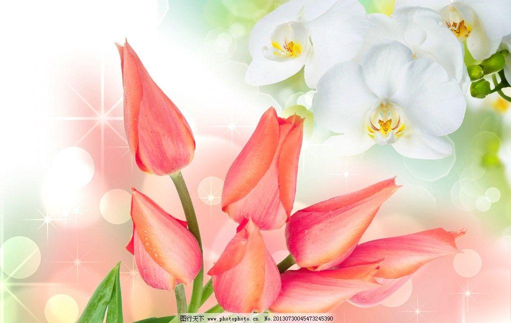 灿烂花卉 郁金香图片 梦幻鲜花 花蕊 花朵 花束 植物 蝴蝶兰图片