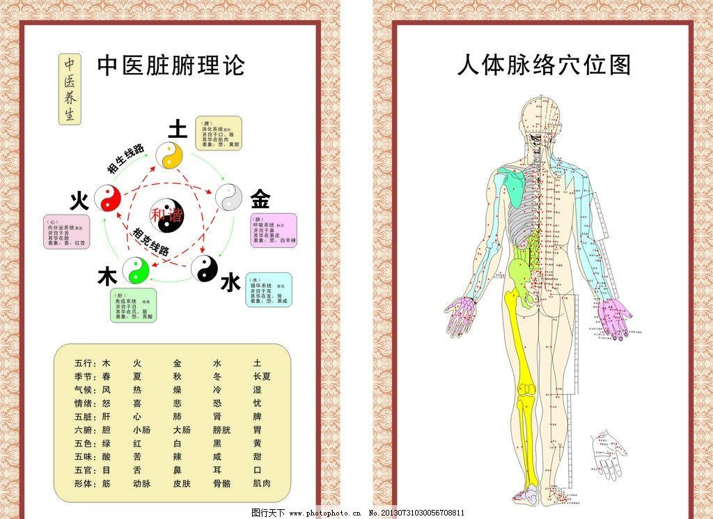 中医脏腑理 人体脉络图片