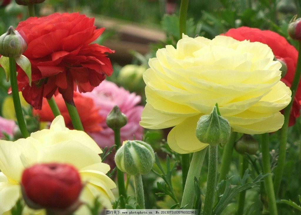 鲜花图片图片
