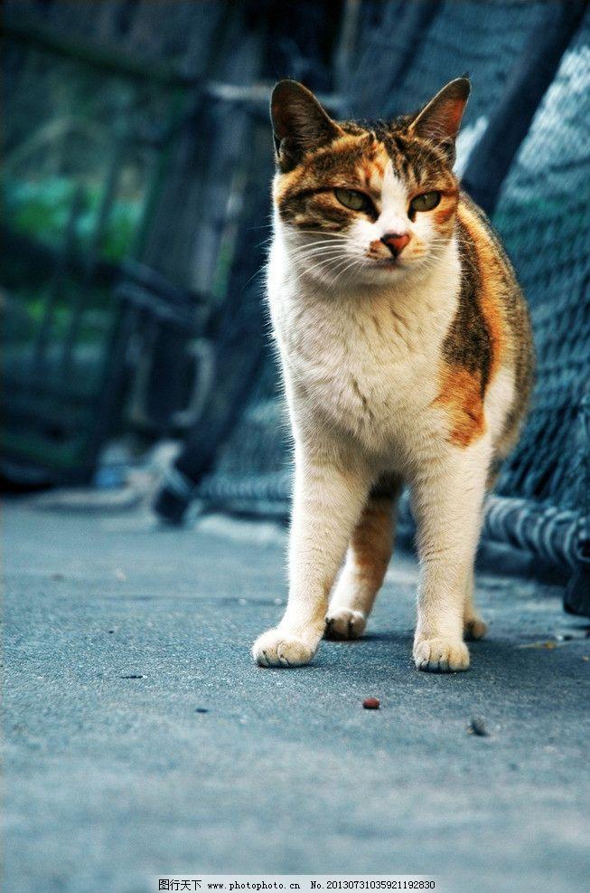 壁纸 动物 猫 猫咪 小猫 桌面 653_987 竖版 竖屏 手机