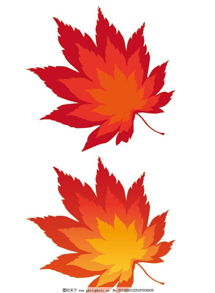 矢量枫叶 红叶 树叶 红枫 秋天 秋季图片