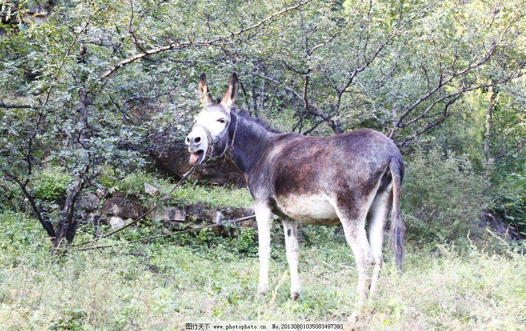 驴动物 乡村 旅游 绿树 野生动物 生物世界 摄影