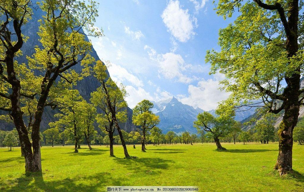 树木 大树 树林 树叶 自然景观 自然 树木树叶 自然风景 生物世界