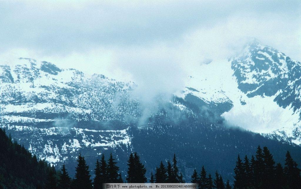 雪山山顶 针叶林 树木 森林 自然风景 自然景观 摄影