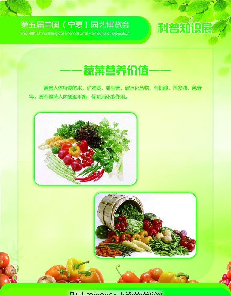 蔬菜展板 宁夏园艺博览会 蔬菜营养价值 西红柿 新鲜西兰花 土豆 豆角