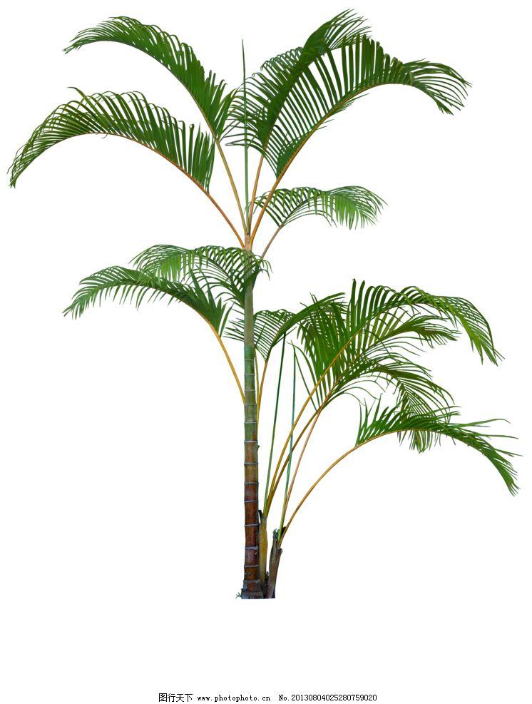 植物 灌木 小树 园林植被 单棵树 树木树叶 生物世界 设计 70dpi png