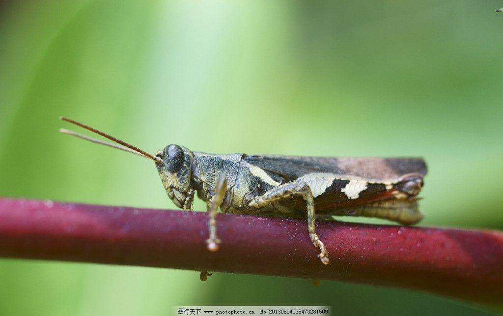 动物 昆虫 微距 生态