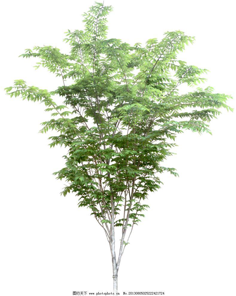 树木 植物 园林植被 乔木 配景 树木树叶 生物世界 设计 72dpi png