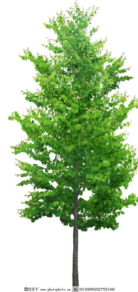 树木 乔木 灌木 园林植被 小树 配景 树木树叶 生物世界 设计 72dpi p