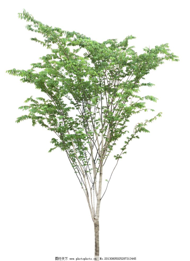 树木 植物图片