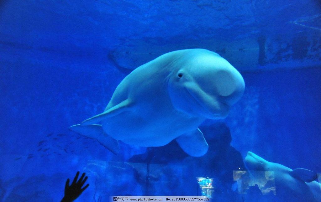 壁纸 海底 海底世界 海洋馆 水族馆 桌面 1024_645