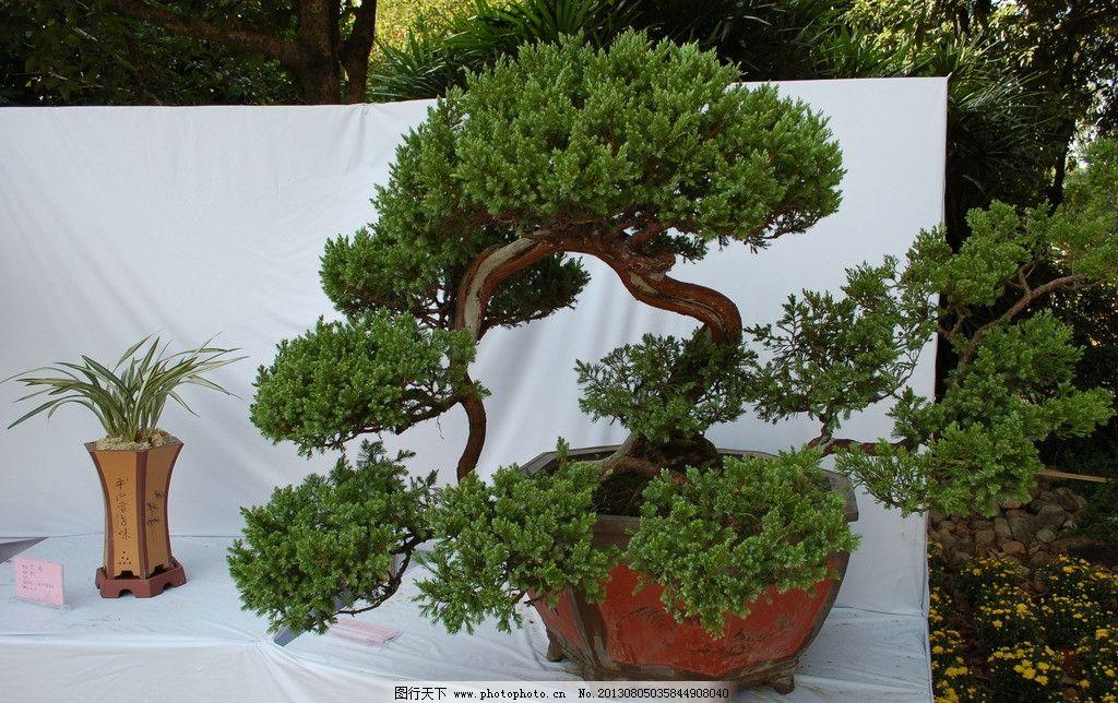 盆栽艺术 植物 绿化 盆景 盆栽 环保 环境 绿色植物 文化艺术 园林