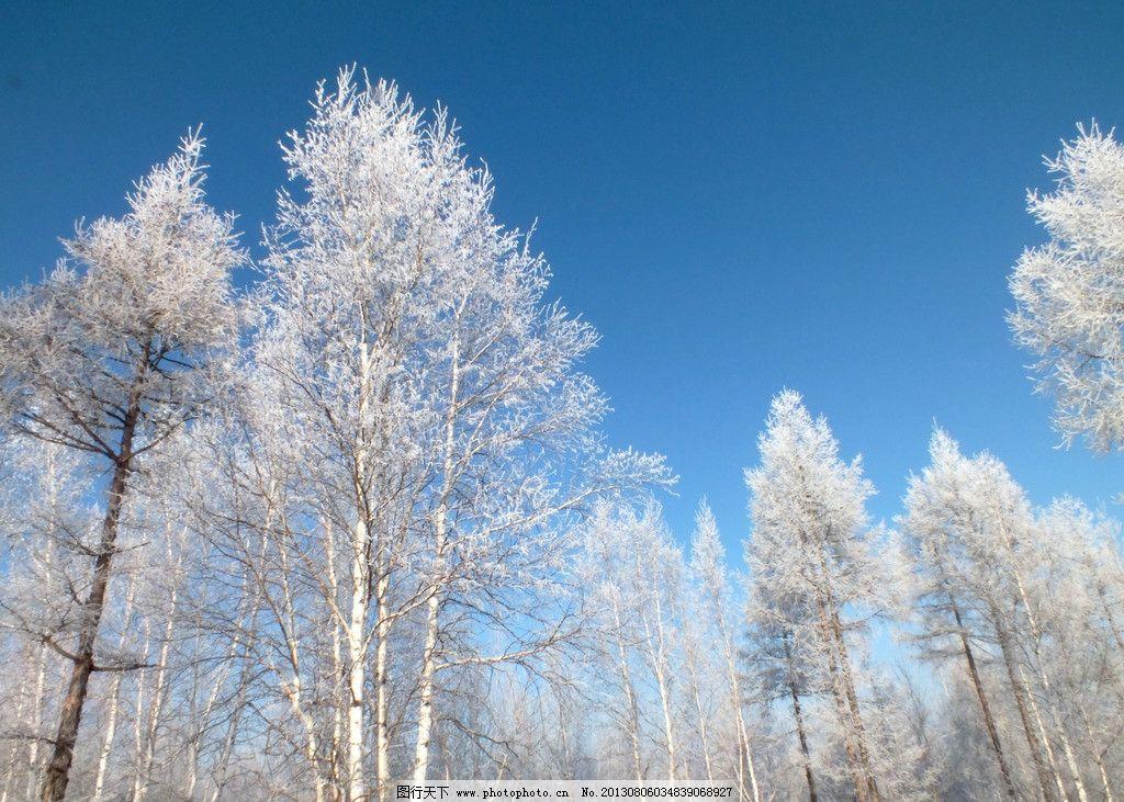 冬天五峰山风景 根河市 冬天 五峰山 雾凇 松树 桦树 树林 蓝天 自然