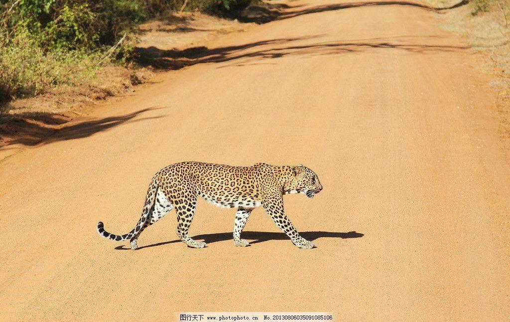 澳洲动物图片沙漠