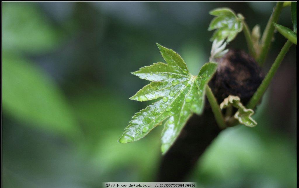 植物叶子 植物 叶子 绿色 春天 佳能 树木树叶 生物世界 摄影 72dpi