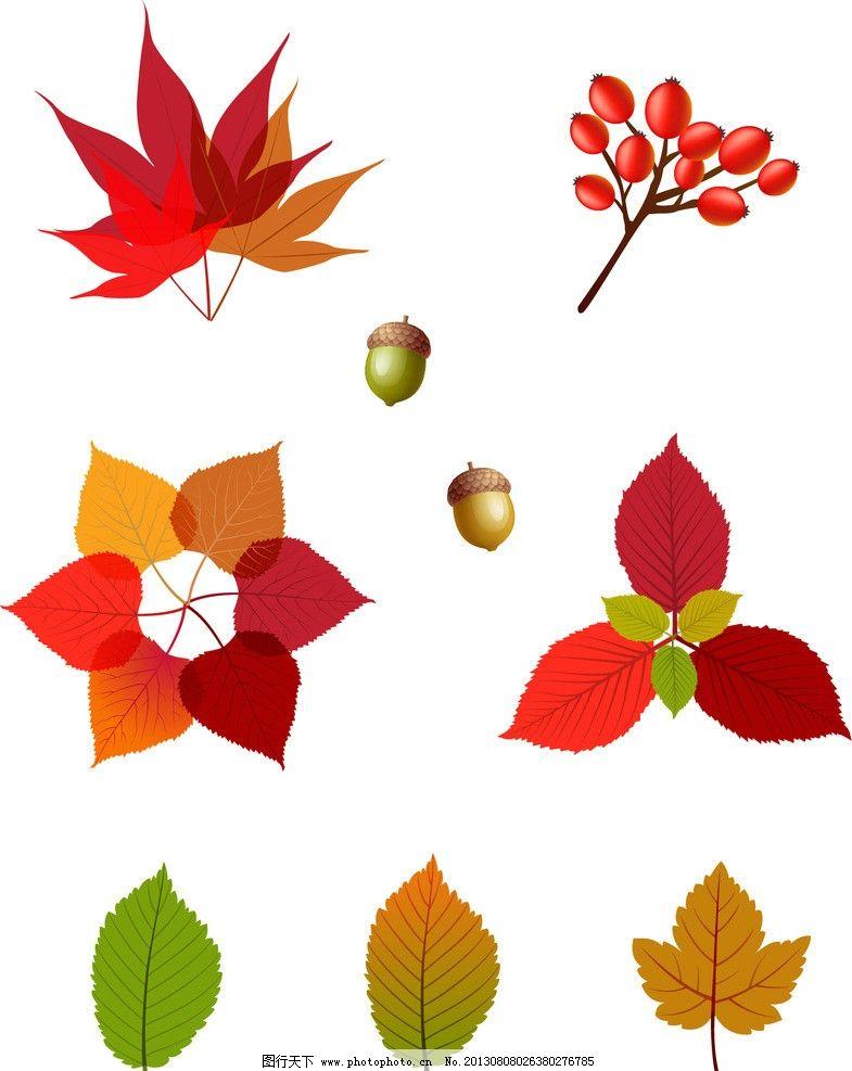 矢量树叶 树叶 叶子 枫叶 栗子 红色叶子 绿叶 植物 矢量素材 其他