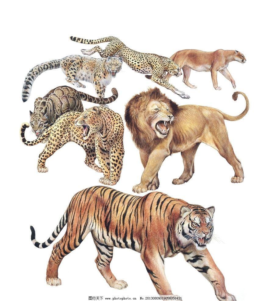 野兽 生肖 老虎 虎年 插画 狮子 豹子 动物 绘画书法 文化艺术 设计