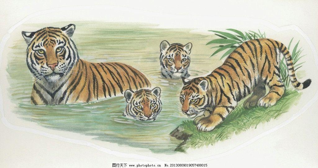 老虎 生肖 虎年 绘画 画作 水中 绘画书法 文化艺术 设计 300dpi jpg