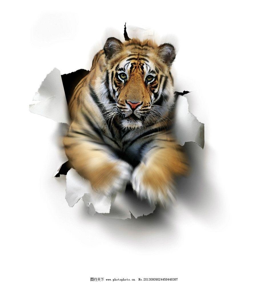 老虎 生肖 虎年 插画 冲击 奔跑 冲破 力量 野生动物 生物世界 设计
