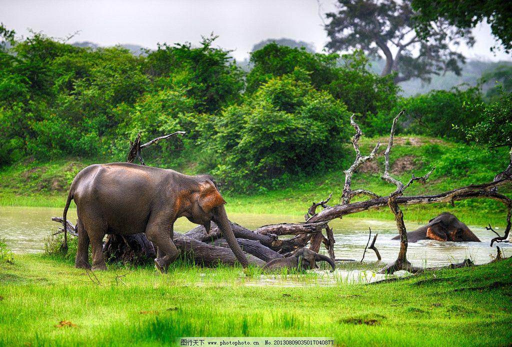 大象是几级保护动物