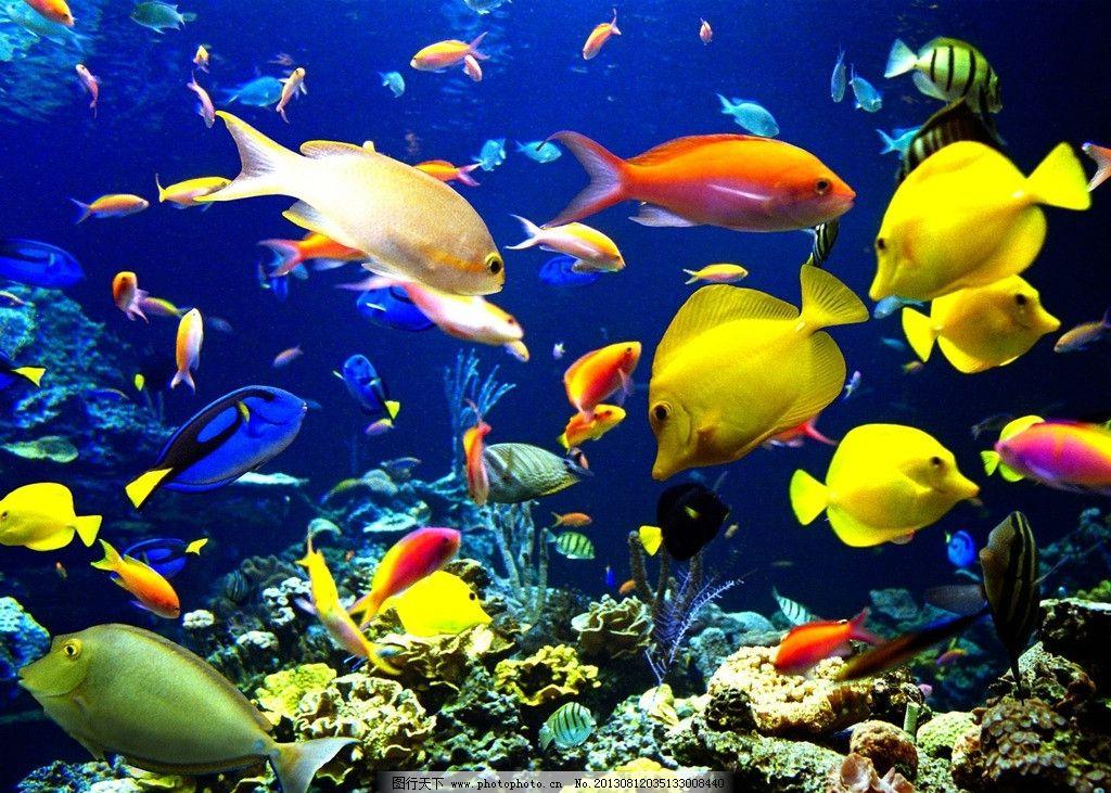 海底鱼群 海底世界 鱼 深海鱼 五彩鱼 海底 海底动物 海底鱼类 海底