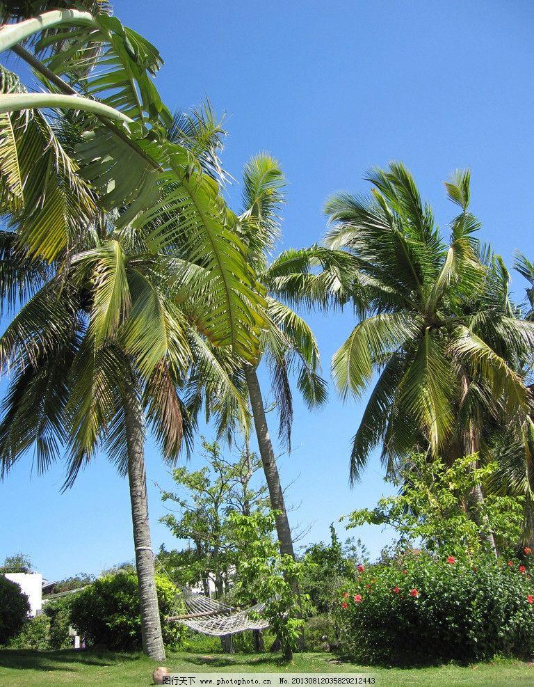 椰子树 蓝天 树 植物 热带植物 吊床 天空 草坪 树木树叶 生物世界 摄