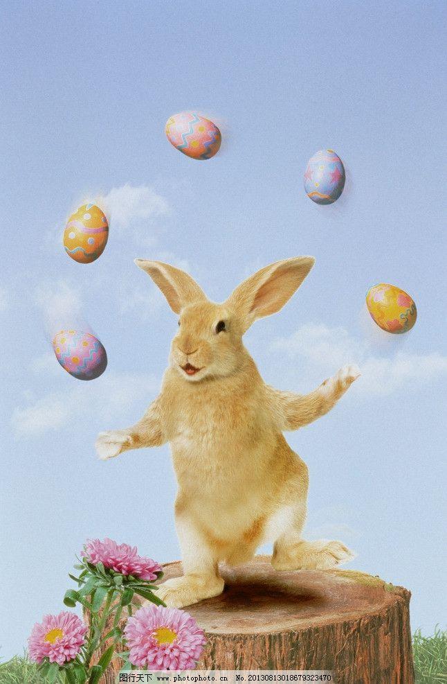 兔子 小动物 可爱 彩蛋 杂耍 杂技 动漫动画